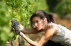 Bulletin de paie agricole 2017